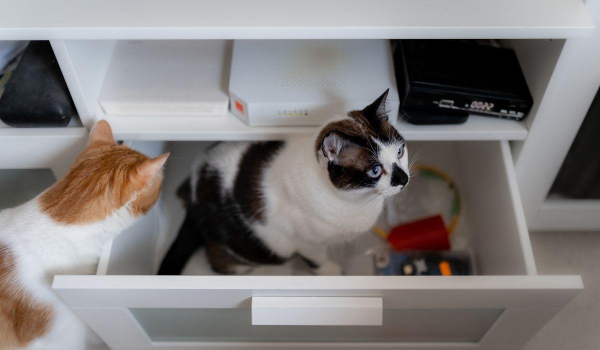 zwei katzen räumen eine schublade aus